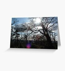 Forest as the Sun Begins to Fall Greeting Card