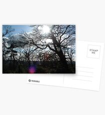 Forest as the Sun Begins to Fall Postcards
