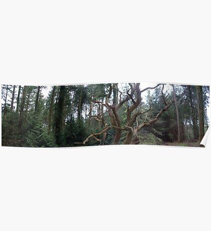 Dead Tree Poster