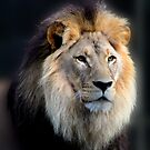 MAJESTIC... by Helen Akerstrom Photography