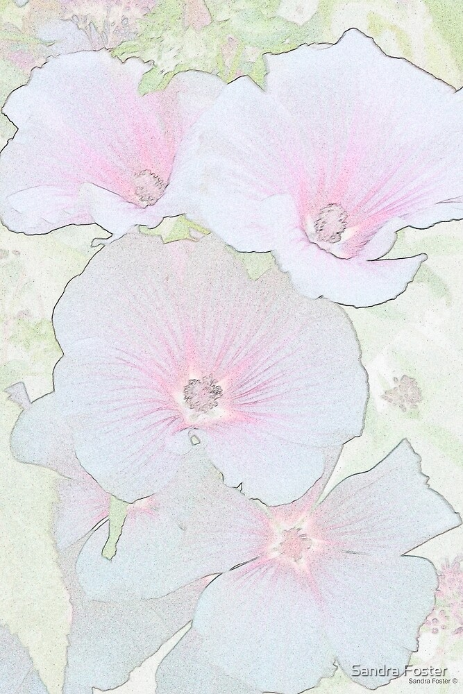 Lavatera Blossoms  by Sandra Foster