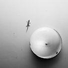 Gecko & Light in monochrome by AllshotsImaging