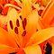 Really ORANGE Flowers