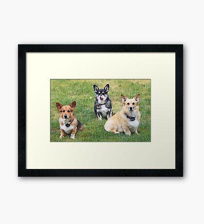 My Three Men ~ Framed Print