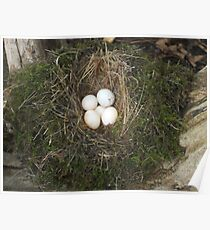 Old Bird Nest Poster