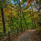 Wissahickon Fall by anorth7