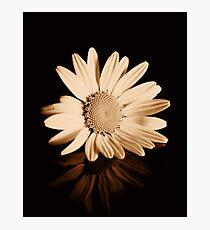 Albumen Daisy Photographic Print