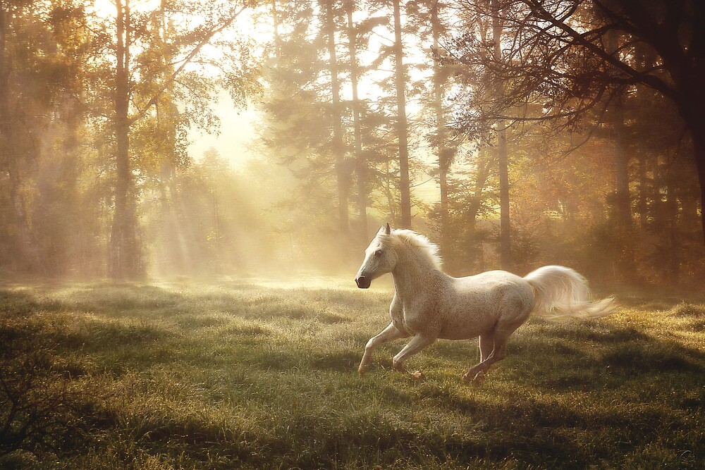 """""""Dreamland canter"""" by JanneO"""