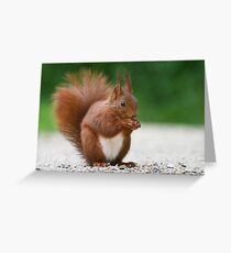 SQUIRREL DIARIES -VII- Greeting Card