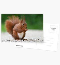 SQUIRREL DIARIES -VII- Postcards