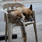Homeless Dog in China by troffle24