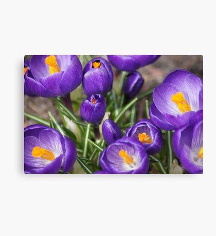 Springtime Jewels Canvas Print