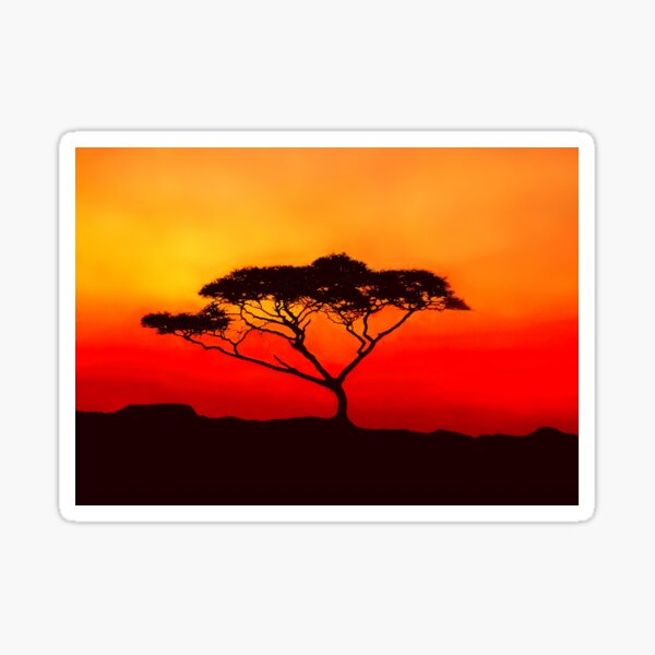 An Acacia Tree in the Sunset Sticker
