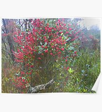very berry bush Poster