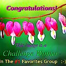 Challenge Winner #1 Favorites Group by Tori Snow