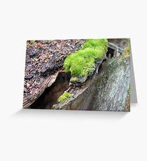 An Island Of Moss  Greeting Card