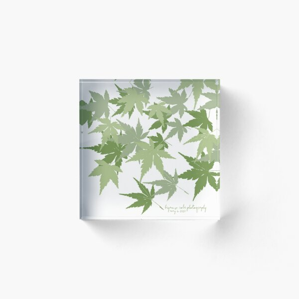 Japanese Maples, Spring 2020 Acrylic Block