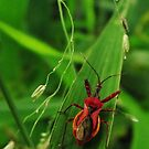 One strange red bug... by mindy23