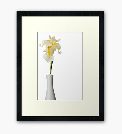 White Iris 1 Framed Print