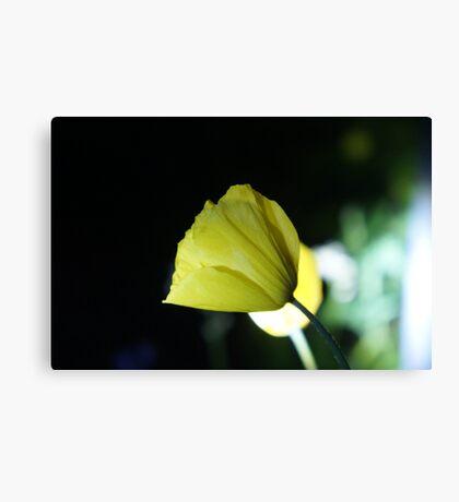 Flower in the Dark Canvas Print