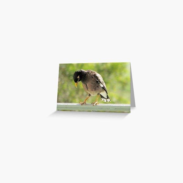 Hawaiian Myna Bird Greeting Card