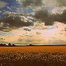 Oilseed Rape Fields, along the Teesdale Way Trail. North England by Ian Alex Blease