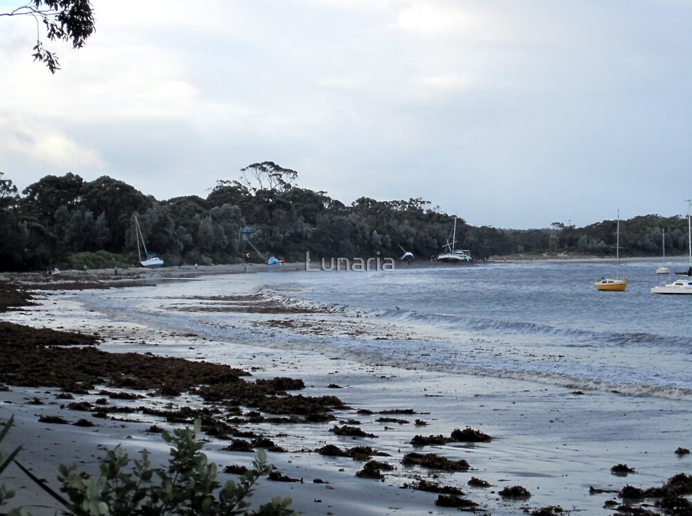 """I hate Mondays""...I....  (Callala Bay, NSW 6.6.12) by Lunaria"
