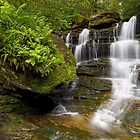 Early Summer at Forgotten Falls by Tim Devine