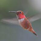 Four-wings by Carl Olsen