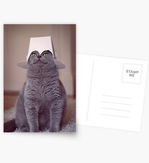 fig 1.4 - Cat with Chinese takeaway box on head Postcards
