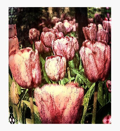 The Beauty of Spring Photographic Print