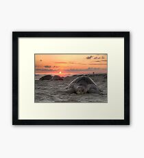 Turtle and Sunset Framed Print