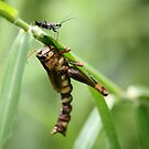 Two friends having a chat!!! by Karue