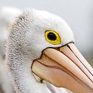 A Pelicans' Gaze by Mark  Lucey