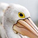 A Pelicans' Gaze by Mark  Lucey