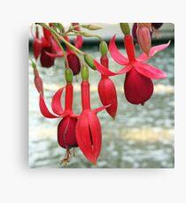 Fuchsias in Red Canvas Print