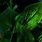 Hosta in the Dark by Sandra Lee Woods
