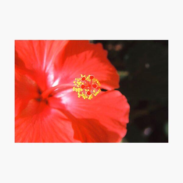 A Hummingbird's Sweet Spot Photographic Print