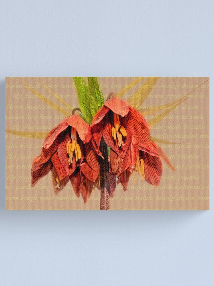 Alternate view of Lily Bloom Canvas Print