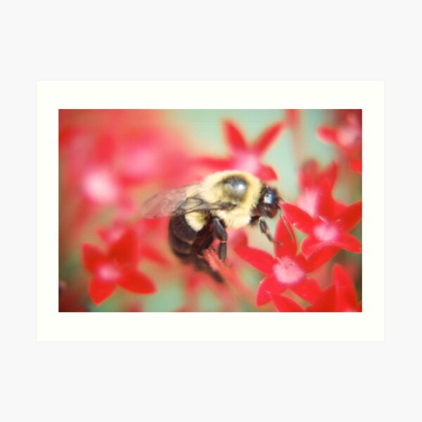 Bumblebee Hard At Work Art Print