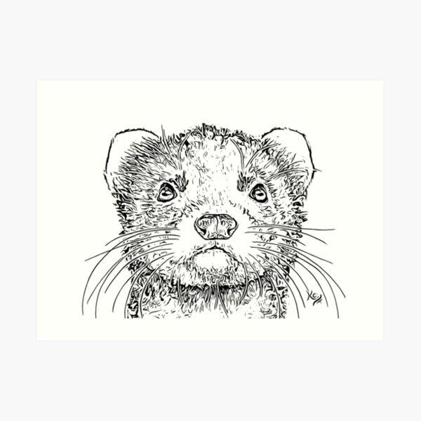 Black and White Ferret Art Print