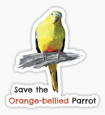 Orange-bellied Parrot sticker Sticker