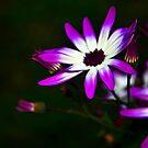 Purple by Martina Fagan
