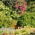 A Peaceful Gardens by Martina Fagan