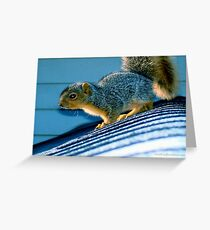 Chippie Rehabilitated Greeting Card