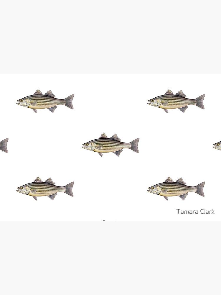 Striped Bass (Morone saxatilis) by edenart