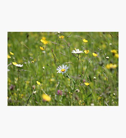 Wild Meadow Photographic Print