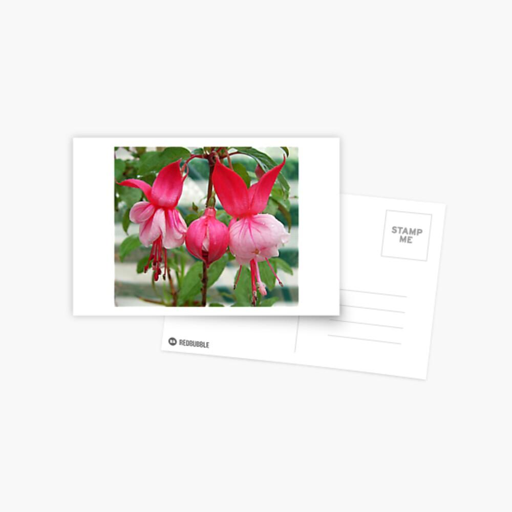 Elegant Fuchsia Postcard