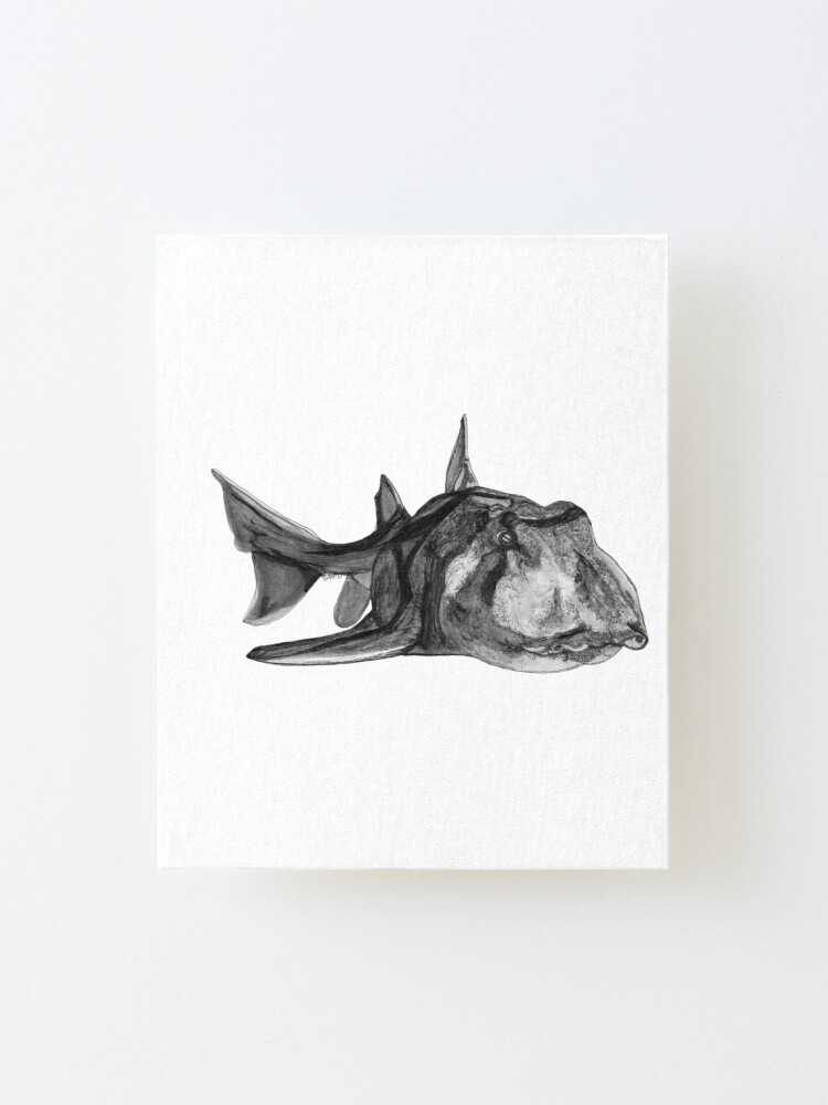 Alternate view of Jack the Port Jackson Shark Mounted Print