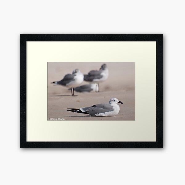 Guard Gull Framed Art Print